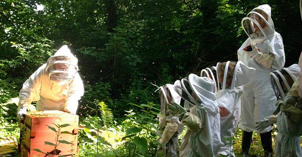 projet pédagogique apiculture