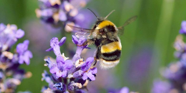 Sauvegarder les abeilles